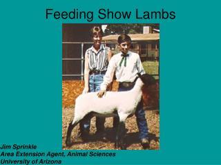Feeding Show Lambs