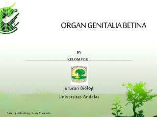 ORGAN GENITALIA  BETINA