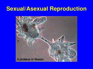 Sexual/Asexual Reproduction