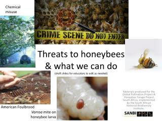 Threats to honeybees & what we can do (draft slides for educators to edit as needed)