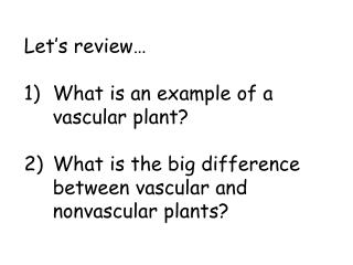 Let's review… What is an example of a vascular plant?