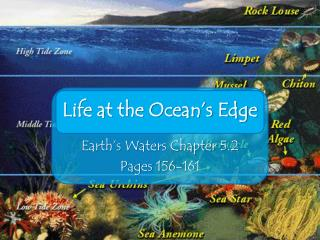 Life at the Ocean�s Edge
