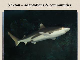 Nekton –  adaptations & communities