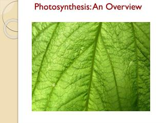 Photosynthesis : An Overview