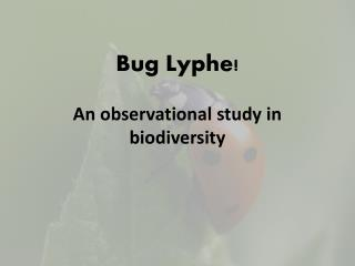 Bug  Lyphe !  An observational  study in biodiversity