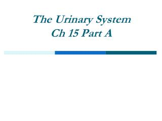 The Urinary System Ch 15 Part A