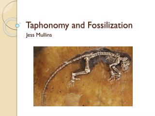 Taphonomy  and Fossilization
