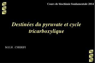 Destinées du pyruvate et cycle tricarboxylique