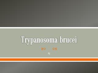 T rypanosoma brucei