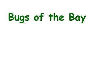 Bugs of the Bay