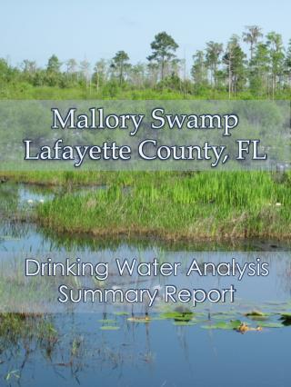 Mallory Swamp Lafayette County, FL
