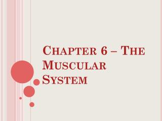Chapter 6 – The Muscular System