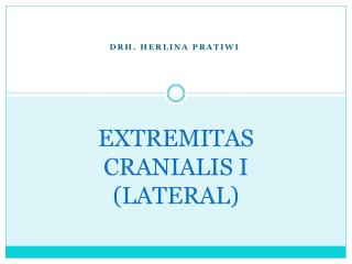 EXTREMITAS  CRANIALIS  I (LATERAL)