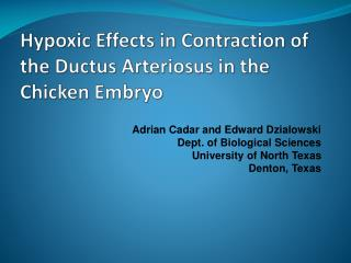 Hypoxic Effects in Contraction of the  Ductus Arteriosus  in the Chicken Embryo