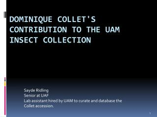 Dominique  Collet's  contribution to the UAM insect Collection