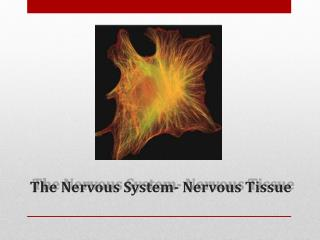 The Nervous System- Nervous Tissue