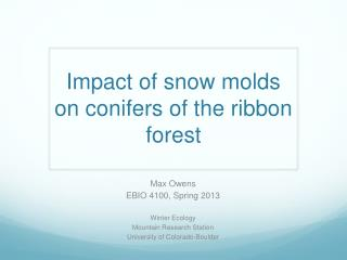 Impact of snow molds on conifers of the ribbon forest