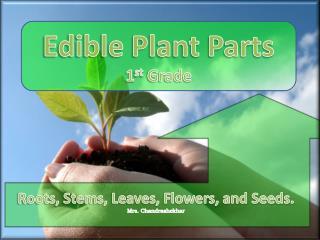 Roots, Stems, Leaves, Flowers,  and Seeds. Mrs. Chandrashekhar