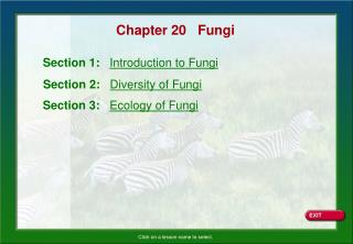 Chapter 20   Fungi