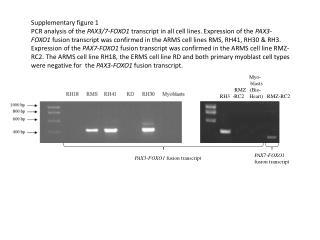 Myo -                         blasts             RMZ   (Bio-  RH3  -RC2    Heart)   RMZ-RC2