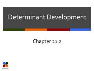 Determinant Development