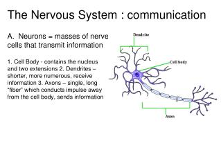 The Nervous System : communication