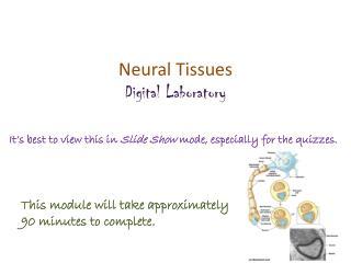 Neural  Tissues Digital Laboratory