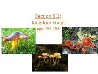 Section 5.3 : Kingdom Fungi pgs. 152-158