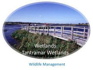 Wetlands  Tantramar Wetlands