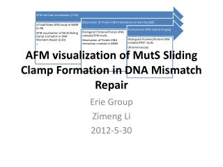 AFM visualization of  MutS  Sliding Clamp Formation in DNA Mismatch Repair