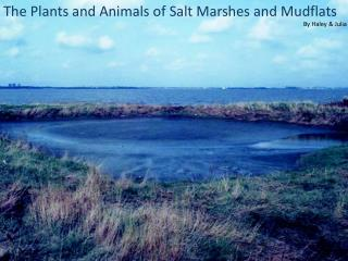 The Plants and Animals of Salt Marshes and Mudflats