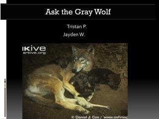 Tristan P.