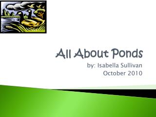 All About Ponds