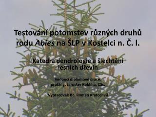 Testování potomstev různých druhů rodu  Abies na ŠLP v Kostelci n. Č. l.