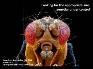 Looking for the appropriate size:  genetics under control