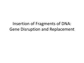 I nsertion of Fragments of DNA:  G ene  D isruption and Replacement