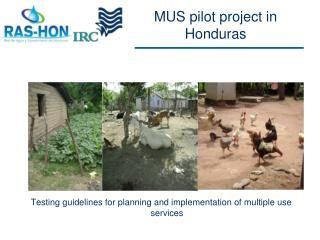 MUS  pilot  project in Honduras