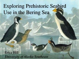Exploring Prehistoric Seabird Use in the Bering Sea
