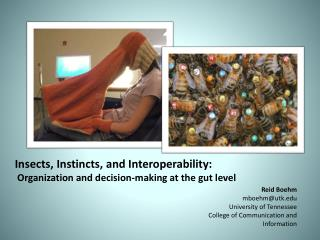 Insects, Instincts, and Interoperability:  Organization and decision-making at the gut level