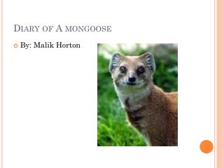 Diary of A mongoose