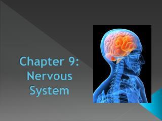 Chapter 9: Nervous System