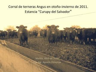 """Corral de terneras Angus en otoño-invierno de 2011.  Estancia """"Curupy del Salvador """""""