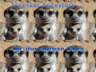 Meerkat  Ancestors