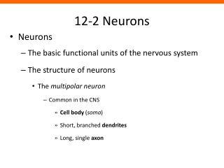 12-2 Neurons