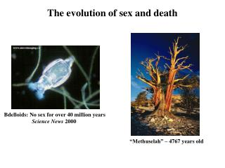 The evolution of sex and death