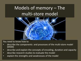 Models of memory – The multi-store  model