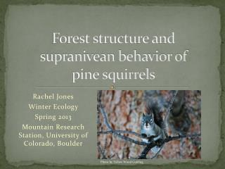 Forest structure and supranivean behavior of         pine squirrels
