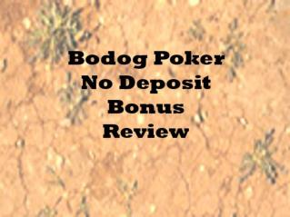 No Deposit Bodog Poker Bonus Review