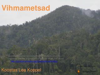Vihmametsad