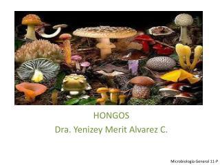 HONGOS Dra.  Yenizey Merit Alvarez  C.